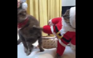 Chyba prezent mu się nie spodobał