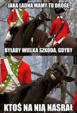 Niecny plan konia
