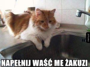 Napełnij kotu