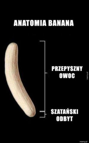 Anatomia banana