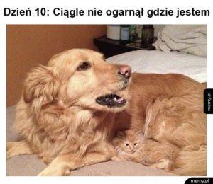 Kamuflaż level kot