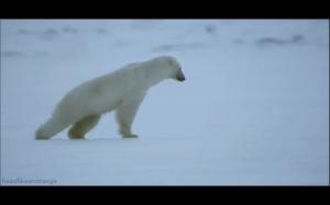 Niedźwiedź.exe przestał działać