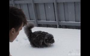 Mruczek pierwszy raz zobaczył śnieg