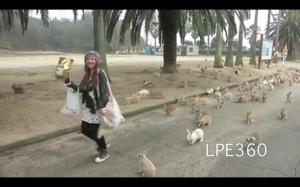 Wyspa królików