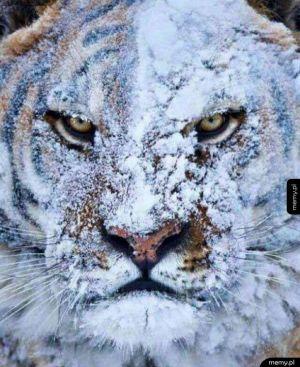 Gdy dostaniesz śnieżką w twarz