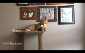 Zastanawiam się, co zobaczył kota