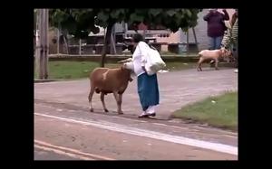 Zła koza
