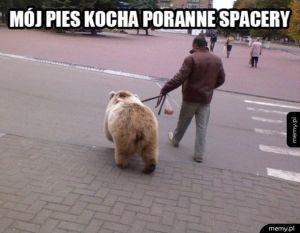 Poranny spacer z psem