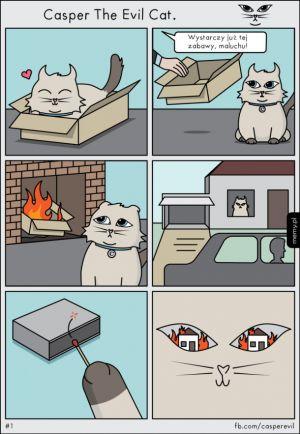 Klasyczny kot
