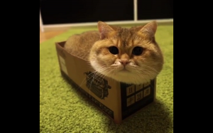 Kiciuś w pudełku