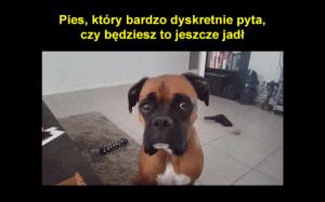 Subtelny pies
