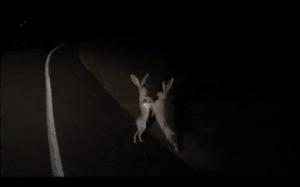 Sprzeczka królików