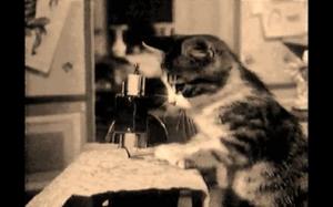 W latach 50-tych małe kotki były wykorzystywane do niewolniczej pracy w przemyśle tekstylnym