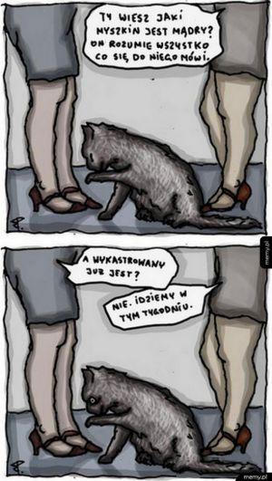 Jak zaginął kot