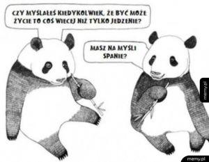 Pandy rozmyślają o życiu