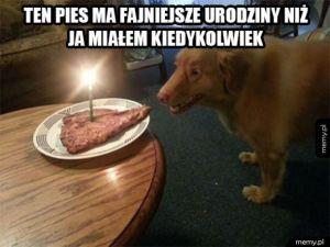 Pies ma cudowne urodziny