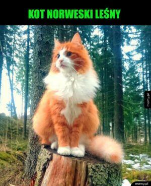 Inteligentny i towarzyski kot