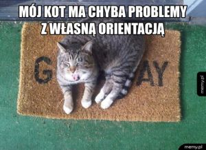 Orientacja mojego kota