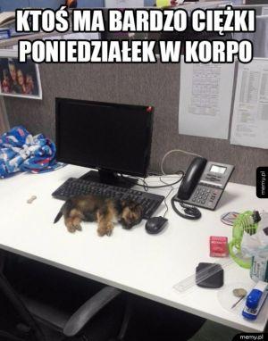 Ktoś tu usnął na stanowisku pracy