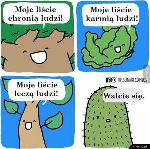 Kaktusy i tak są spoko