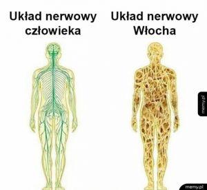 Układy nerwowe