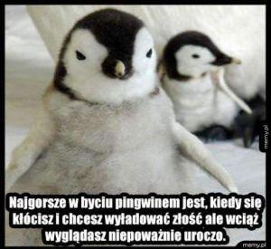 Bycie pingwinem