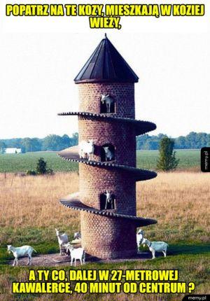 Popatrz na te kozy