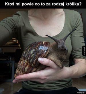 Jakiś dziwny królik