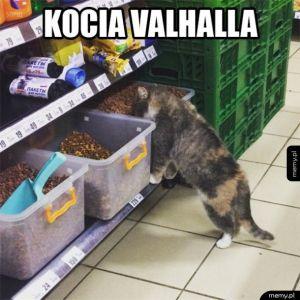 Kot znalazł swoje niebo