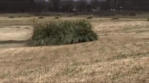 Ciiiii, jestem trawą