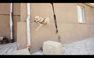 Parkour w wykonaniu psa