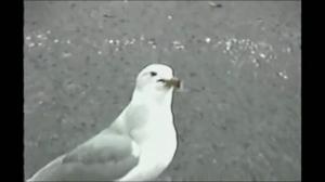 Co ten ptaszek