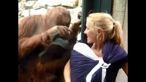 Orangutan chciał zobaczyć dziecko.