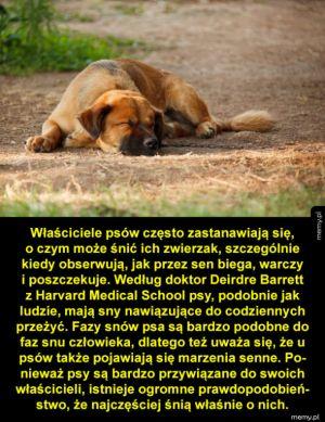 O czym śni twój pies?