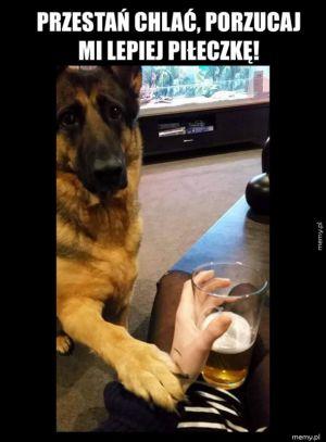 Pies dobrze radzi