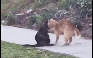 Koci wrestling