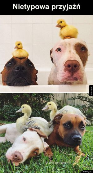 Prawdziwa przyjaźń na całe życie