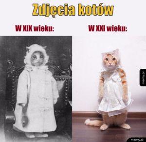 Zdjęcie kotów