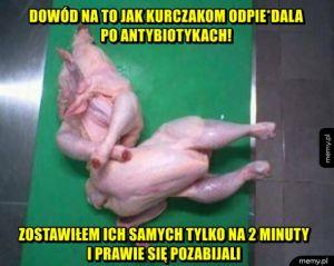 Kurczaki po antybiotykach