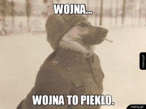 Pies Wojny