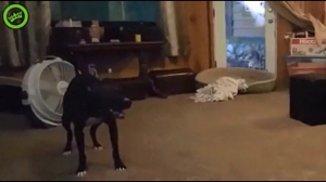 Pies z ADHD
