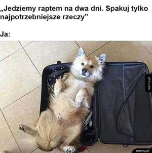 Spakowany do podróży