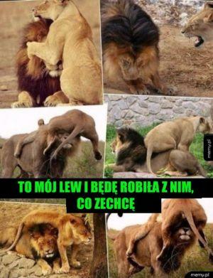 Mój lew