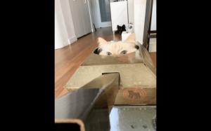 Koteł czołgista