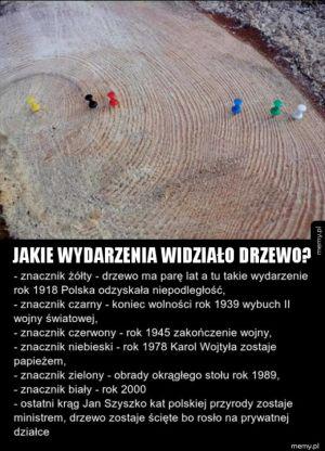 Kawał polskiej historii zapisany w drzewie