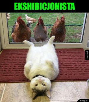 Obnaża się - Kot ekshibicjonista