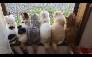 Ciekawe na co patrzą