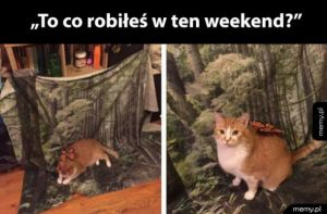 Mój weekend