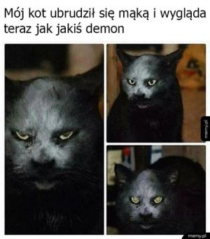 Mój kot jest demonem