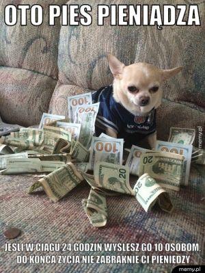 Pies pieniądza